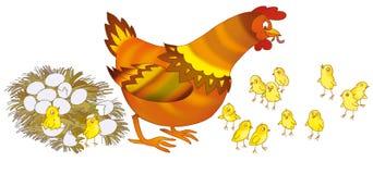 курица Стоковые Изображения