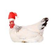курица santas шлема Стоковое Изображение