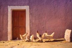 Курицы и цыплята перед сельским домом в Боливии Стоковое Изображение