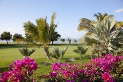 Курорт гольфа Стоковое Фото
