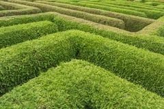 Курсы в лабиринте зеленых изгородей стоковое изображение rf