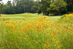 курс цветет гольф Стоковое Изображение