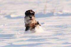 Куртка собаки Стоковое Фото