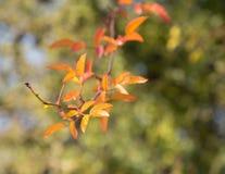 Курчавое падение ветви дерева Стоковые Фотографии RF