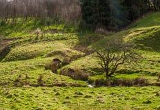 Курчавое река делая свой путь через поля Стоковые Изображения