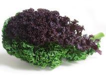 курчавые свежие листья kale Стоковое Изображение