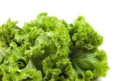 курчавый мустард зеленых цветов Стоковые Фотографии RF