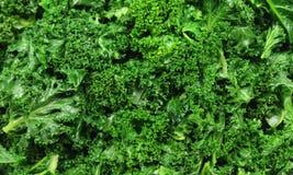 курчавый kale Стоковая Фотография RF