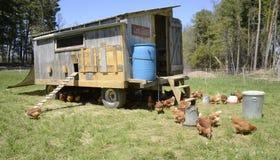 Курятник курицы Стоковая Фотография RF