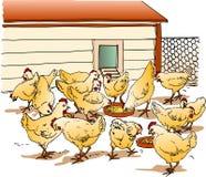 курятник цыпленка Стоковое фото RF