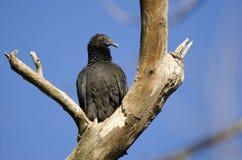Курятник черного хищника, Georgia, США Стоковые Фото