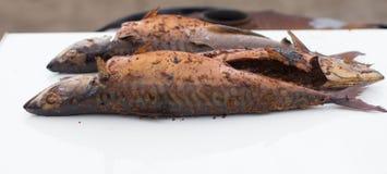 Курят скумбрия Стоковое Фото
