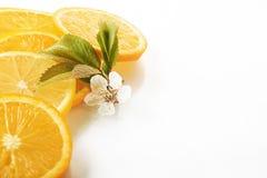 куски апельсина и лимона изолированных на белой предпосылке Стоковые Изображения RF