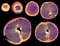 Куски апельсина покрашенные в другом пути на черной предпосылке Стоковое фото RF