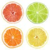 Куски грейпфрута, известки, лимона, апельсина Стоковое фото RF