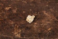 Кусок бумаги на деревянной предпосылке Стоковое фото RF