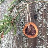 Кусок высушенного апельсина на елевой ветви стоковые фотографии rf