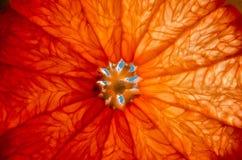 Кусок грейпфрута, цитруса в солнце Стоковые Фото