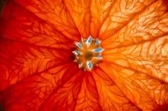 Кусок грейпфрута, цитруса в солнце Стоковая Фотография RF