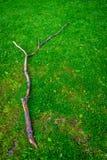 Кусок дерева на зеленой траве на быке Haagse, лесе в Hagu Стоковое Изображение