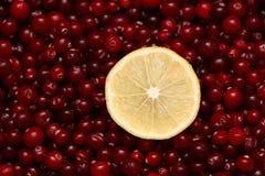 Кусок и клюквы лимона Стоковые Изображения RF