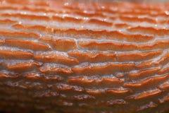 кусок металла тела Стоковые Фотографии RF