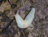 Кусок металла альбиноса Стоковые Фотографии RF