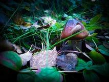 Кусок металла и гриб Стоковое Изображение RF
