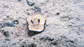 Кусок металла моря наяды Nudibranch цвета макроса истинный сток-видео