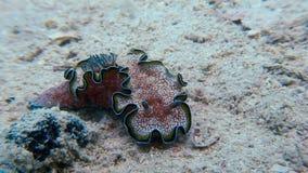 Кусок металла моря наяды Nudibranch цвета макроса истинный акции видеоматериалы