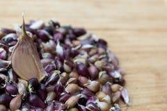 Кусок чеснока на деревянной доске на фоне семян чеснока стоковые фото