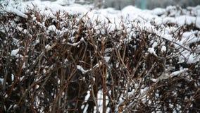 Кустарник в зиме во время вьюги сток-видео