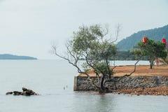 Кустарник дерева на береге морем в Азии Стоковая Фотография