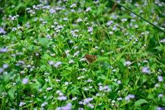 Кустарник леса с естественно красивыми цветками Стоковые Фотографии RF