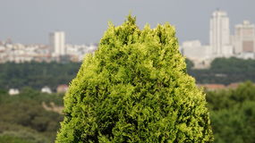 Кустарник или малый Буш Стоковая Фотография RF