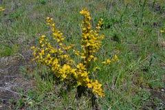 Кустарник с желтыми листьями Стоковое Фото