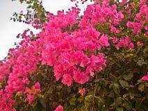Кустарник с яркими красными цветками Стоковые Изображения RF