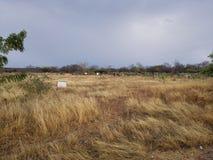 кусты вокруг покинутого завода стоковые изображения rf