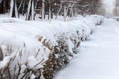 Кусты в парке города предусматриванном с большим слоем снега стоковые фото