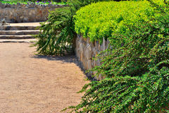 Кусты в парке лета Стоковое Изображение RF