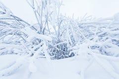 Кусты гнуть под слоем снега зима красивейшего портрета девушки платья принципиальной схемы нося белая стоковые фото