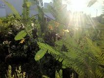 Кусты и заход солнца Стоковая Фотография
