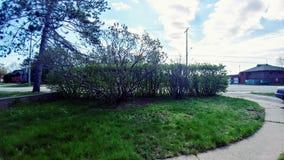 Кусты и путь сада Стоковое фото RF