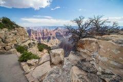 Кусты растут около края северной оправы гранд-каньона Стоковое Изображение RF