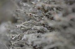 Кусты снега Стоковые Изображения RF