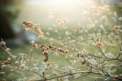 Куст бабочки на заходе солнца Стоковое фото RF