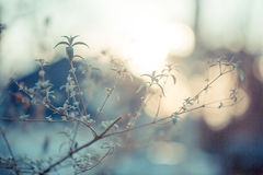 Куст бабочки на заходе солнца Стоковые Фото