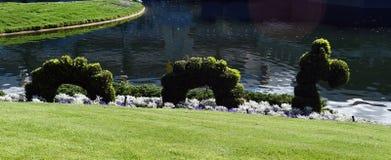 Куст змейки около озера стоковые фото