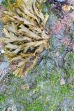 Куст морской водоросли Стоковое фото RF