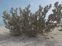 Куст пляжа стоковое фото rf
